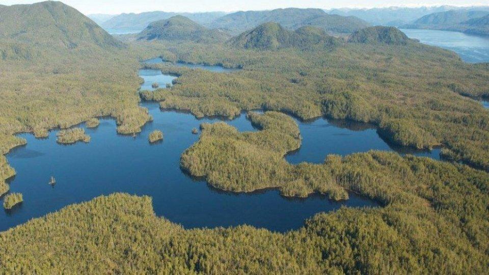 British Columbia, la Foresta del Grande Orsoclima