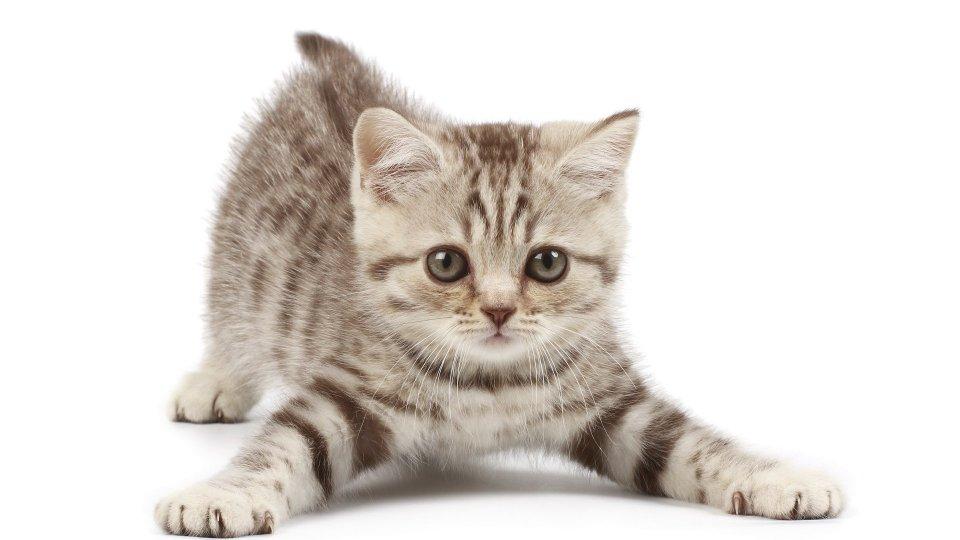 Parliamo di gatti