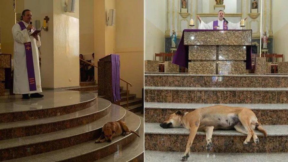 Randagi in chiesa per trovare loro una famiglia