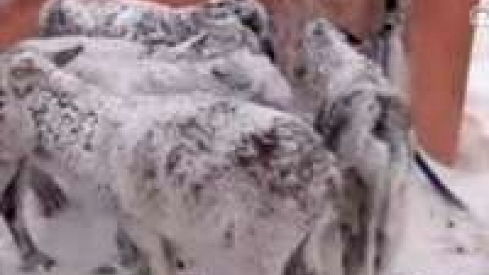 Curiosità 2013: le notizie dell'anno; dal bambino che deve pagare l'Imu agli asinelli turchi congelati