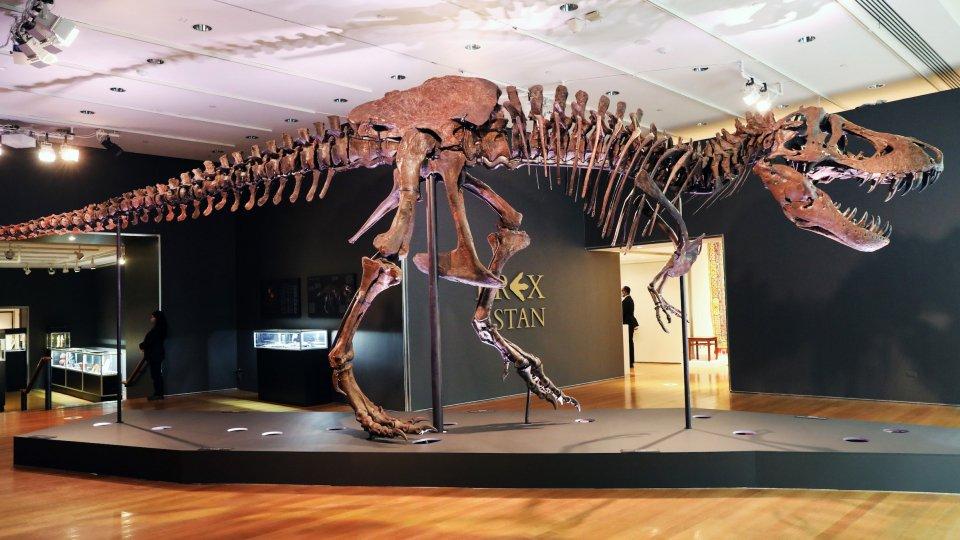 Stan il dinosauro da 31,8 milioni di dollari