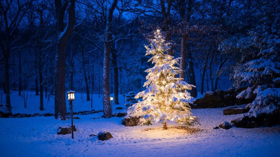 Da dove arriva l'usanza di addobbare un abete per Natale?