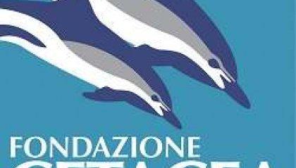 Fondazione Cetacea