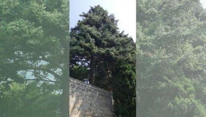 Si chiude con 509 firme la petizione contro l'abbattimento degli alberi a San Marino Città