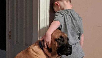 Il cane solidale con il suo piccolo padrone in punizione