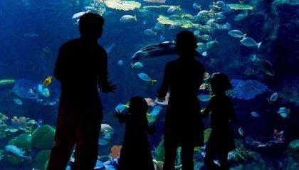 In  lockdown, anche i pesci si deprimono
