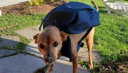 Luigi, il cane postino premiato come il più fedele del 2020