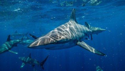 Lotta contro uno squalo per salvare la moglie!