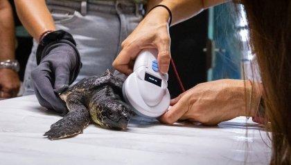 Fondazione Cetacea contro Comune Riccione, 'Siamo al freddo'