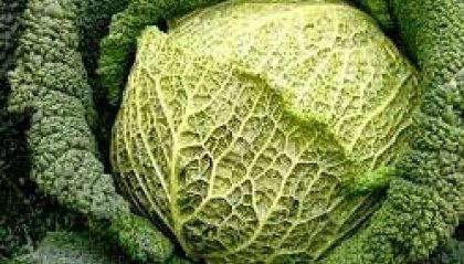 Bocconi di salute - Alimenti indispensabili nella dieta seconda parte